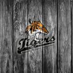 logo Tigers České Budějovice